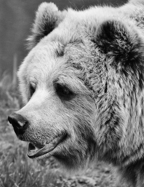 Aliment complet pour d'autres espèces d'intérêt: ours, sanglier, faisan, etc.