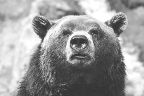 Furaj complet pentru alte specii de interes: urs, mistreț, fazan, etc.