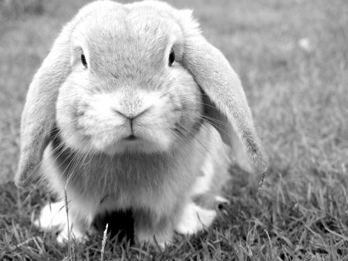 Aliment complet pour lapins